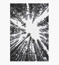 Frosted Treetops Photographic Print