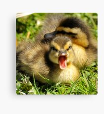 Do You Mind, I'm Trying to Take a Nap! Canvas Print