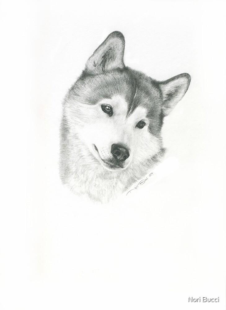 Husky by Nori Bucci