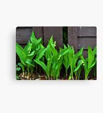 Lily of the Valley......... Canvas Print