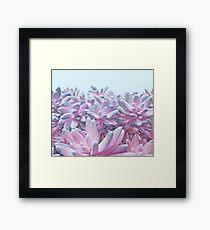 Sweet Succulents Framed Print