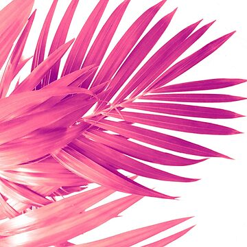 Pink Palm Leaves by cafelab