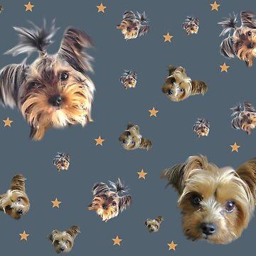 Yorkie stars by chihuahuashower