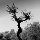 Dancing Tree by villrot