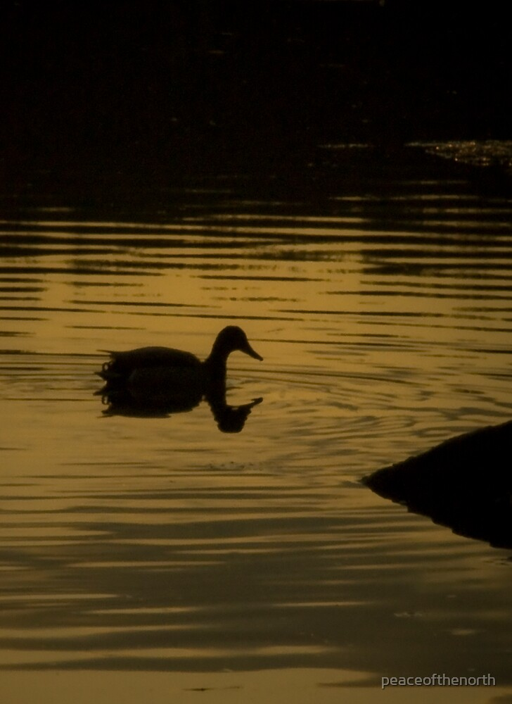 Golden Duck by peaceofthenorth