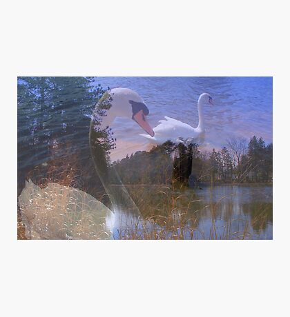 Visions of Summer  Photographic Print