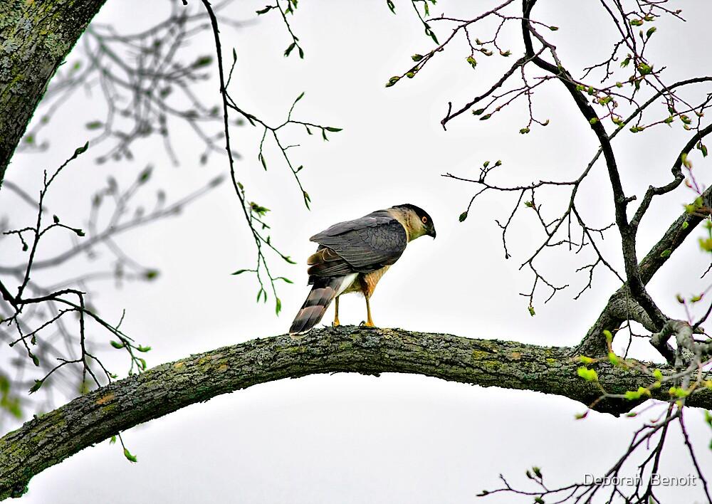 Watching The Birds by Deborah  Benoit