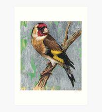 Bird 1 - European Goldfinch Art Print