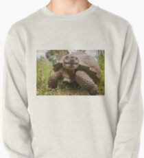 Galapagos Giant Tortoise Pullover