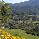 Field of Poppies by NancyC