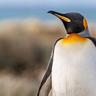 King Penguin by Steve Bulford