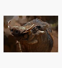 Beauty in the beast Photographic Print