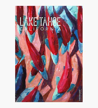 Kokanee Salmon Run (Lake Tahoe, CA) Photographic Print
