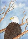 Bald Eagle by Diane Hall