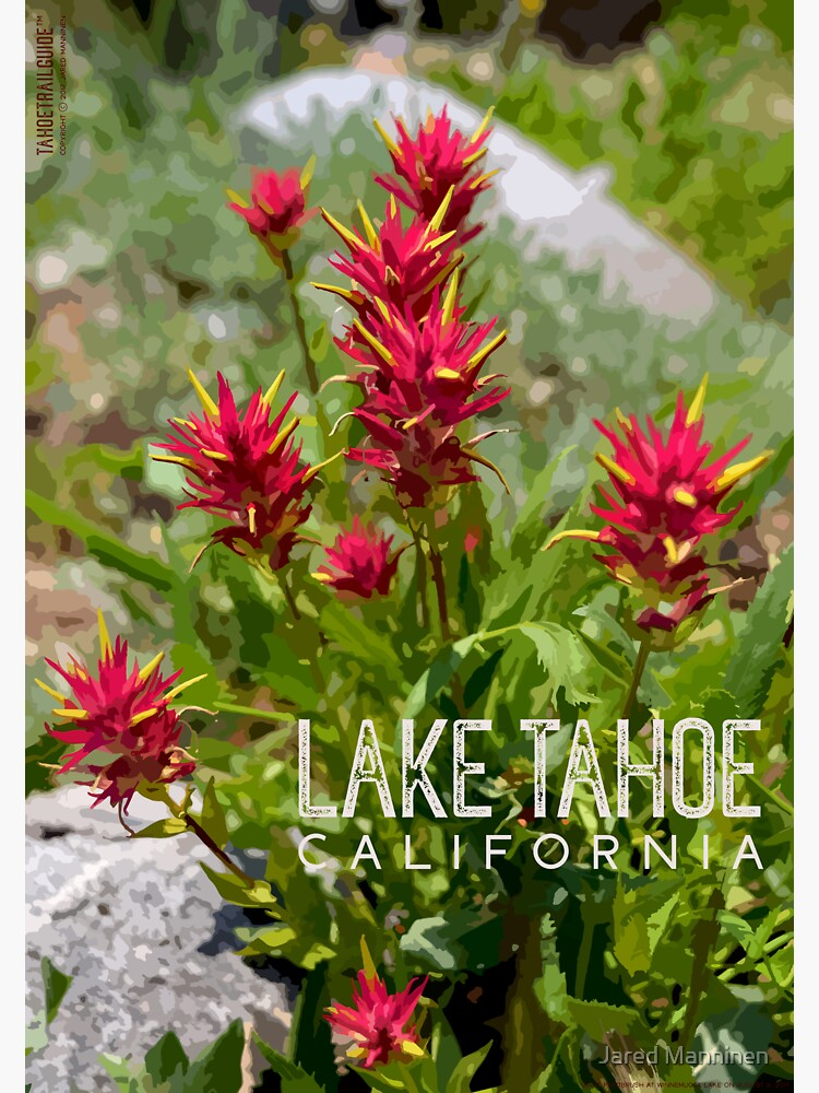 Paintbrush at Lake Tahoe, CA by JaredManninen