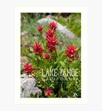 Paintbrush at Lake Tahoe, CA Art Print