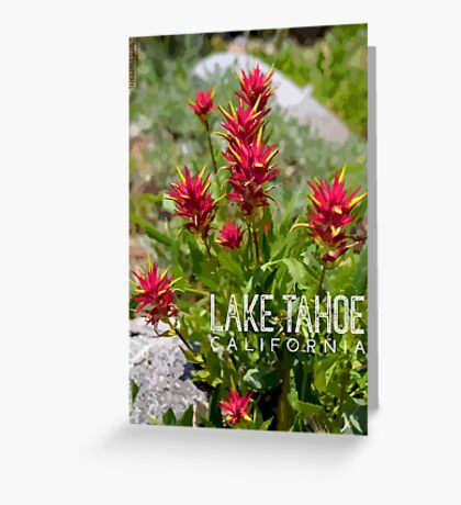 Paintbrush at Lake Tahoe, CA Greeting Card