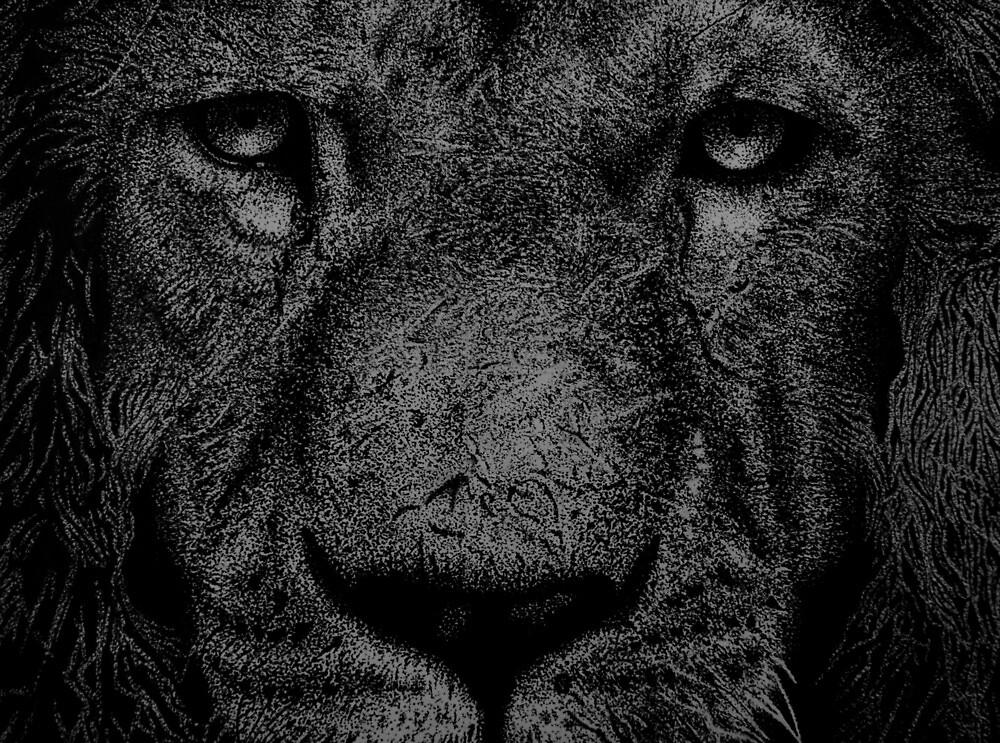 Lion by zgassman