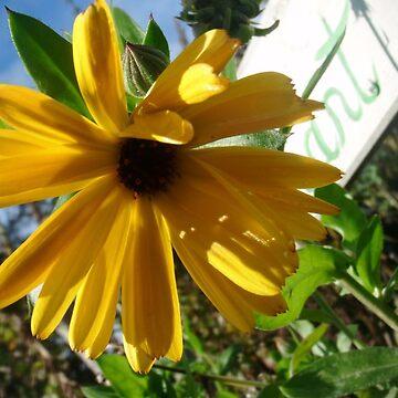 Pretty Irish Flower by QuantumShoulder