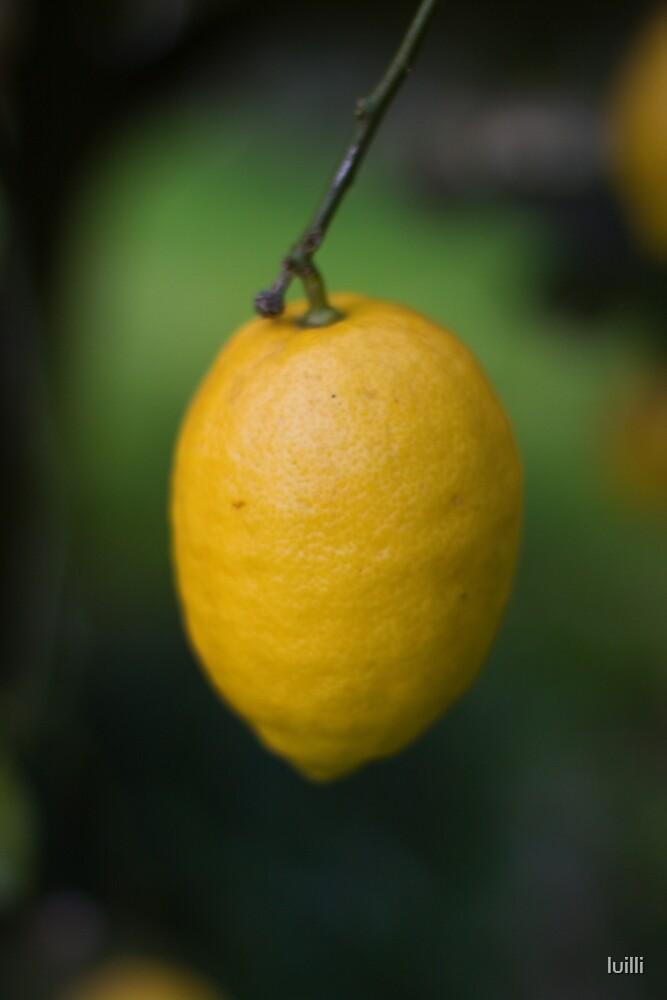 Limóm by luilli