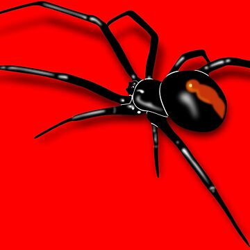 Redback Spider Black Widow by BenjiKing