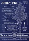 Jeffrey Pine (Pinus jeffreyi) Infographic by Jared Manninen
