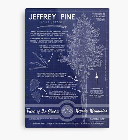 Jeffrey Pine (Pinus jeffreyi) Infographic Metal Print