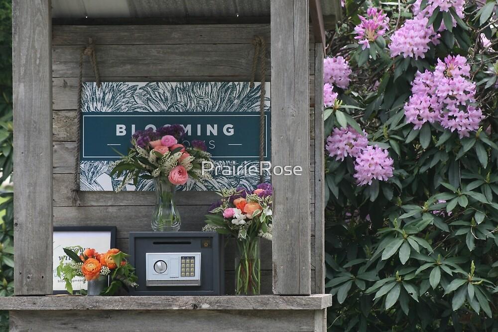 Blooming Flowers by PrairieRose