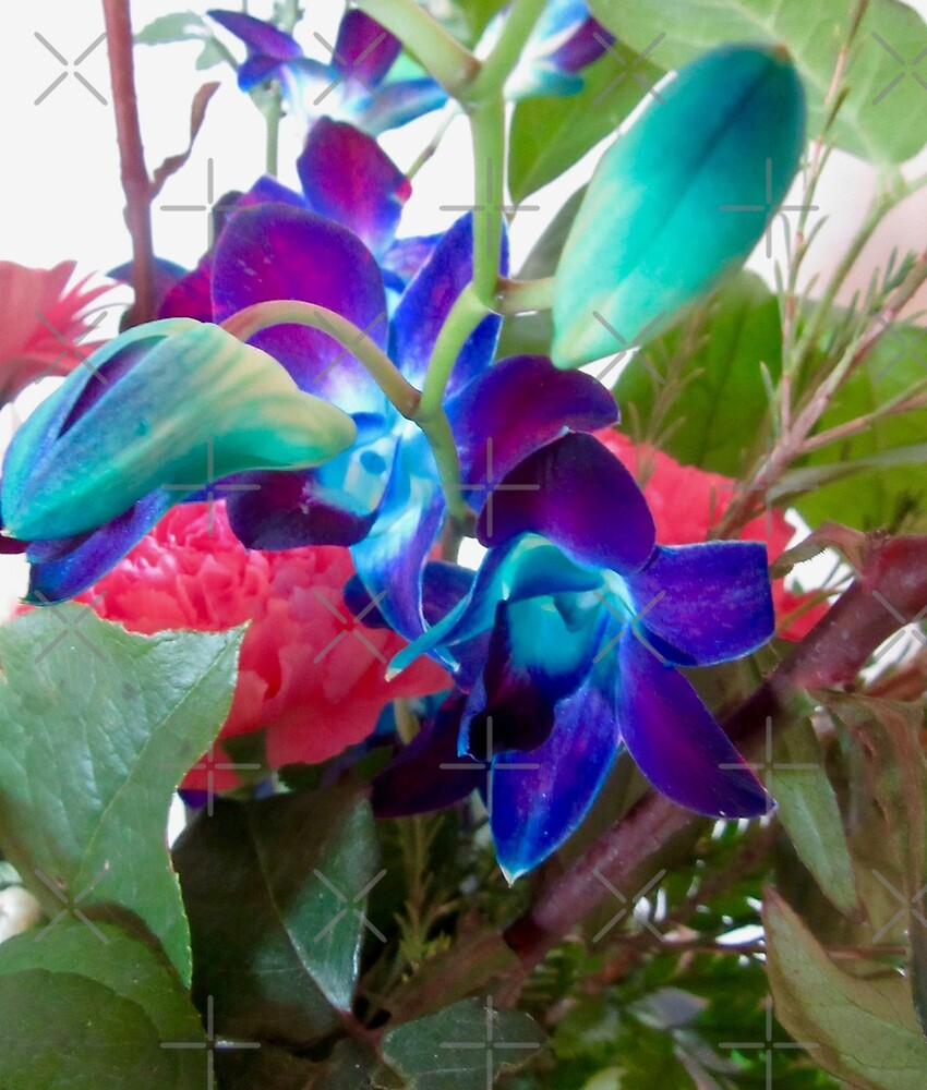 Blue Orchids by Shulie1