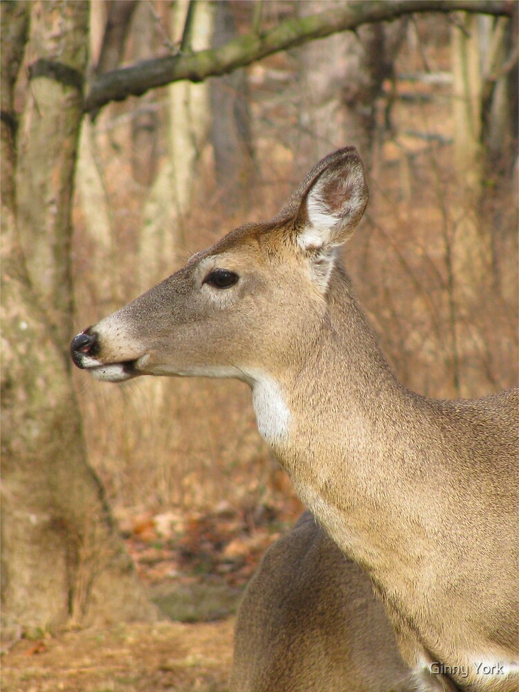 White Tail Deer Profile by Ginny York