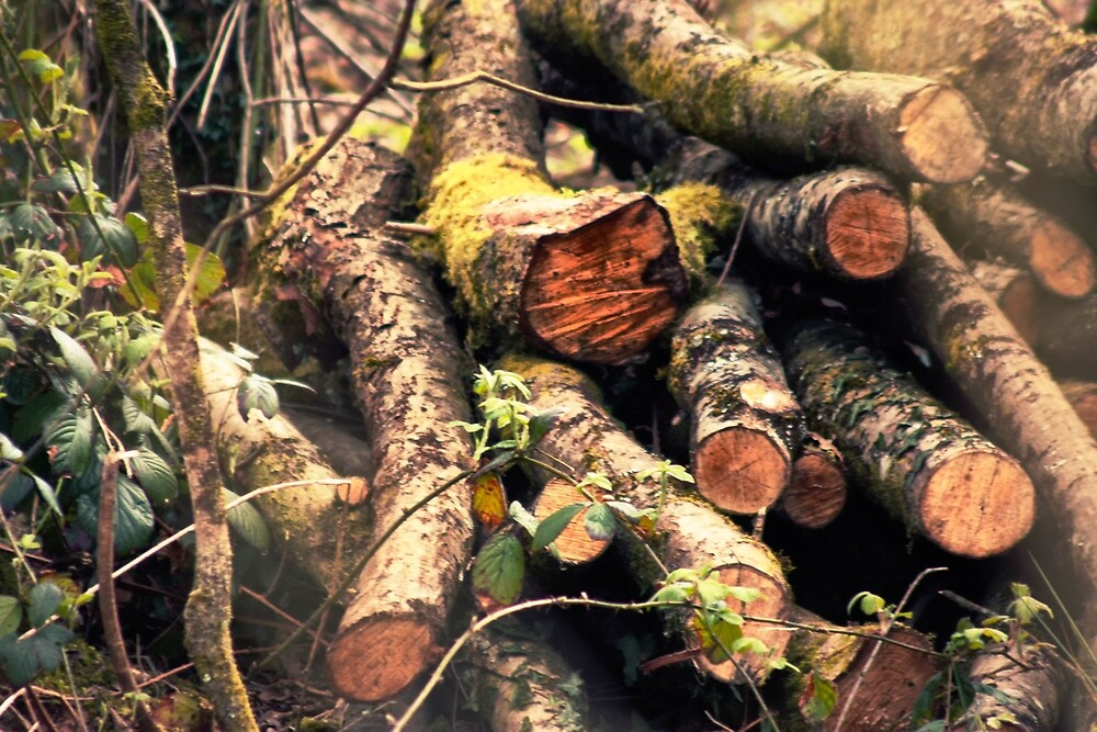 Log pile by franceslewis