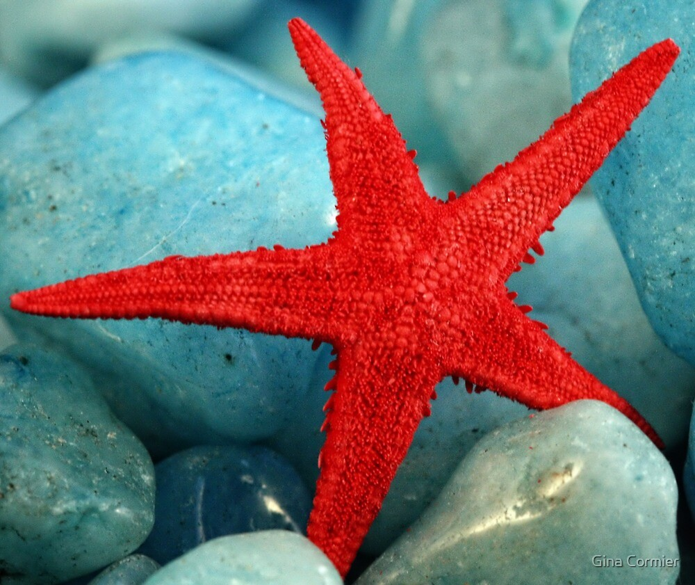Red Starfish by Quinn2810