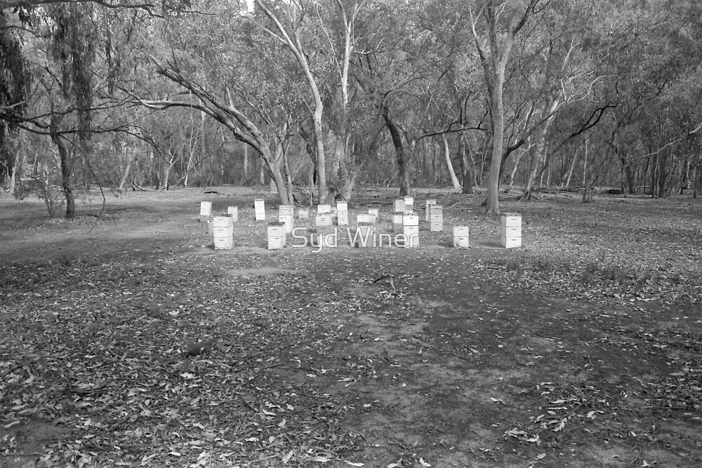 Bee hives, Deddick River by Syd Winer