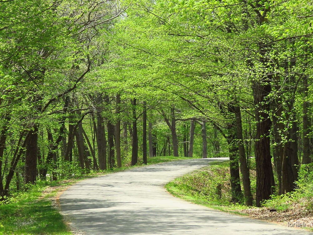 The Long and Winding Road  by lorilee
