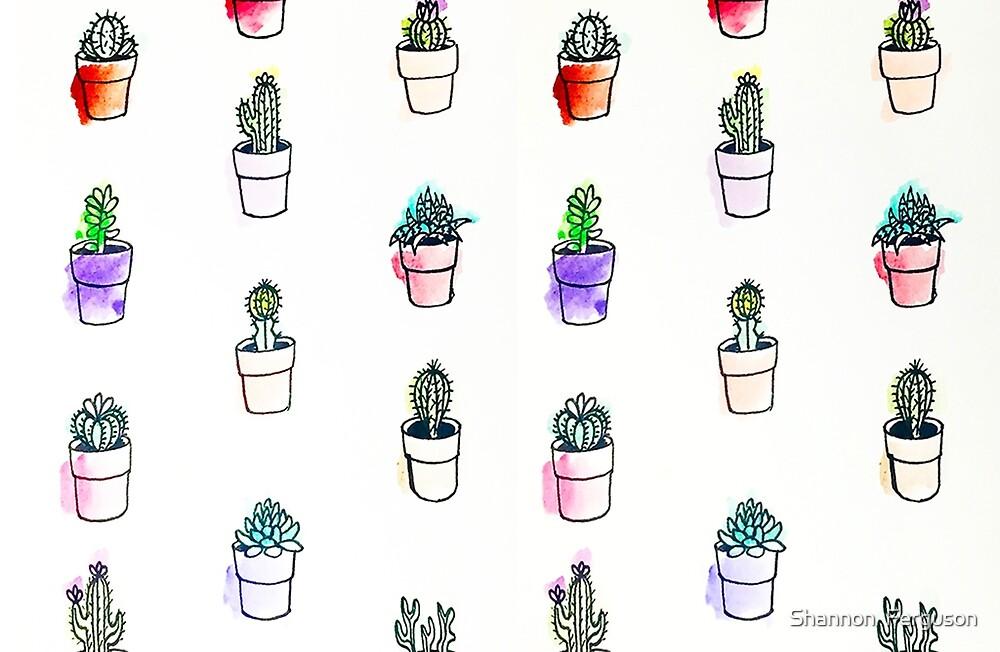 Succulents by Shannon Ferguson