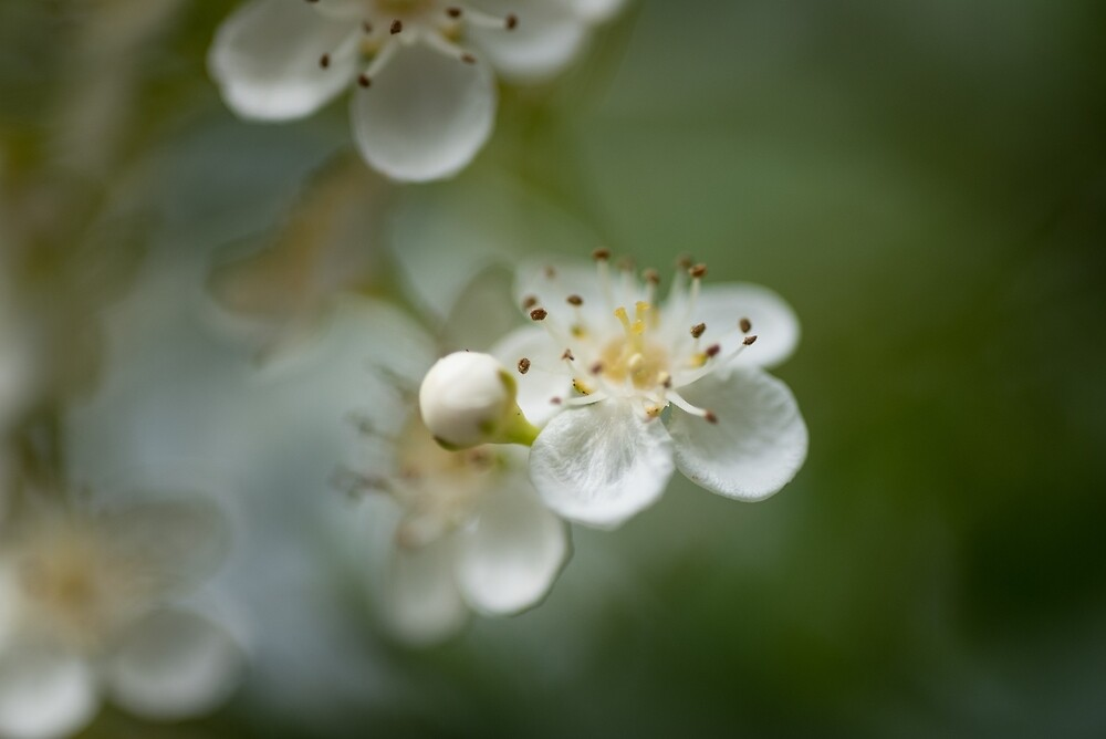 Petal Moments 9 by Ray Cheung