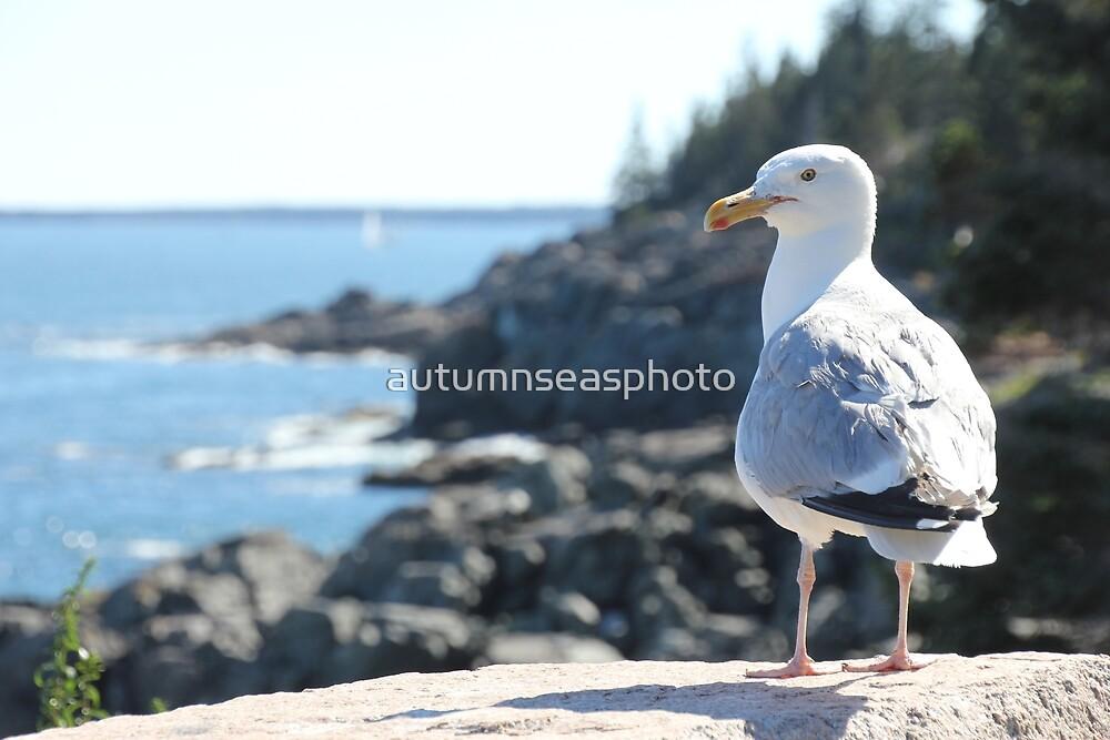 The Maine Gull by autumnseasphoto