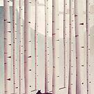 Serene Forest by annisatiarau
