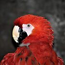 Red Macaw by Len Bomba