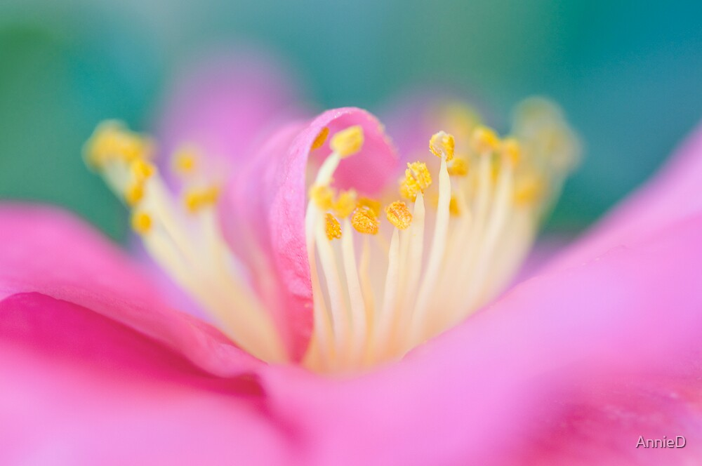 Camelia by AnnieD