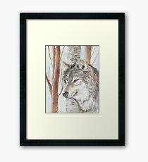 Timber Wolf Framed Print