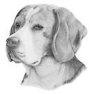 Beagle. English hunting dog by doggyshop
