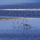 Seaside walk by Bluesrose