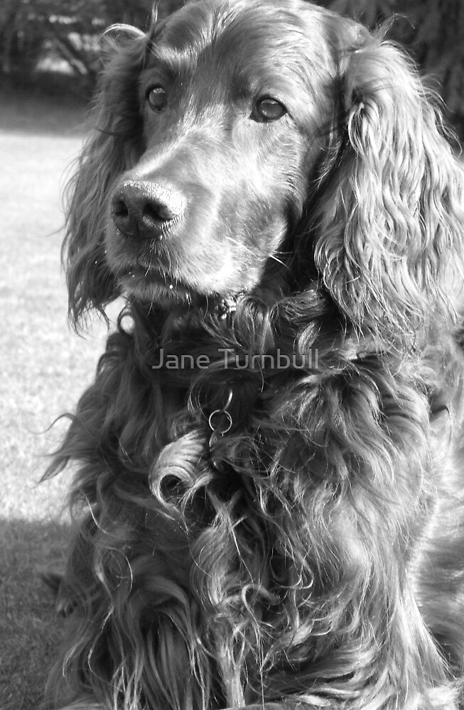 Thoughtful by Jane Turnbull