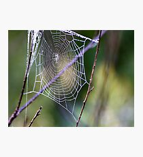 Dew Photographic Print