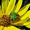 BUGS/ANIMALS on YELLOW, BLUE, GREEN PURPLE Flowers or Foliage
