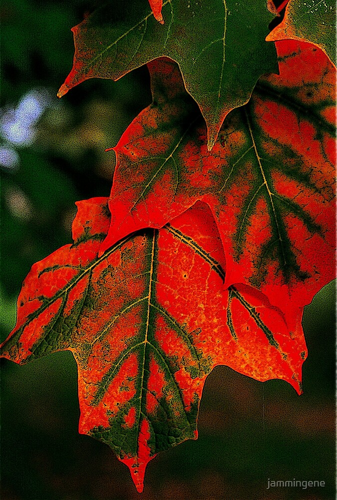 Red and green leaves...you can't bring me down by jammingene