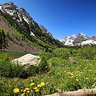 Maroon Bells in Summer by Judy Vincent