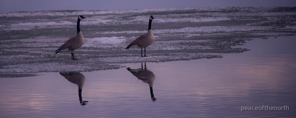 Geese on Ice by peaceofthenorth