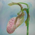 Large Lady Slipper by annimoonsong